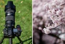 Photo of تجربة لعدسة باناسونيك تله فوتو Lumix S Pro 70-200mm f/2.8 OIS